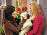 Friends | Season 7 | Episode 8 | The One Where Chandler Doesn't Like Dogs